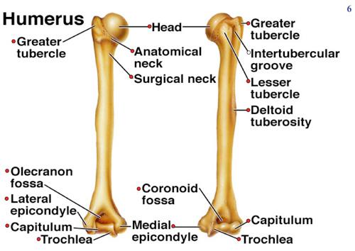 Vocabulary - Educationcategory :Skeleton Project
